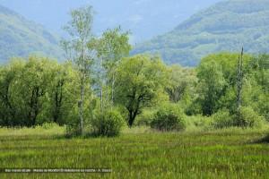 Bas marais alcalin - Marais de Montfort © Belledonne en marche - A. Doucé