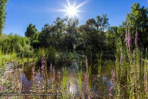 Mare pédagogique - Espace alluvial de la Rolande et du Maupas © B. Bodin