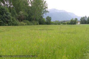 Marais des Goureux - Prairie humide à jonc noueux © CEN Isère - J. Lépine